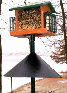 racoon proof bird feeders